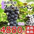 樹上完熟 スチューベン 4kg 送料無料 秀品  山形県産 ぶどう 葡萄 産地直送