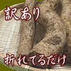 自然薯(じねんじょ) 訳あり800g前後 送料無料