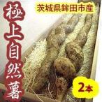 自然薯(じねんじょ)2本入約1.6kg 送料無料 茨城県鉾田市産