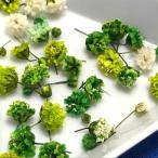 【25輪入り】かすみ草のドライフラワーB/レジン封入/緑/黄緑/グリーン/白/ホワイト