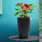 Yahoo!TSUTAYA TOKYO ROPPONGIヤフー店【新商品】自動水やり機能付植木鉢 Parrot Pot(パロット・ポット) Bluetooth植物管理センサー内蔵プランター ブラック
