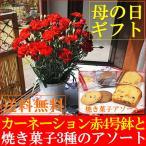 母の日 花 スイーツ ギフト 送料無料 カーネーション鉢植え赤4号&クッキー4個 早割り 早期割引