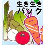 OPP防曇野菜印刷袋 生き生きパック#25にんじん、メークインなど・・・6000枚