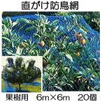 果樹用 直がけ防鳥網 1000d 6m×6m 果樹すっぽり防鳥ネット 徳用20個