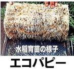 ニッテン 育苗用下敷紙 エコパピーII 水稲・ネギ エコパピー2 1000枚入 日本甜菜製糖