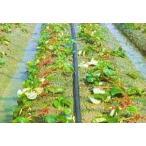 灌水ホース スミサンスイ M-03 200m×1巻 住化農業資材