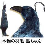 鳥追いからす カラスの黒ちゃん 身幅18cm×体長60cm 本物の羽毛使用 模造カラス