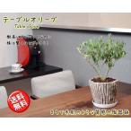 コンパクト樹形 テーブルオリーブ 6号鉢植え 陶器鉢 【送料無料※沖縄・離島は除く】【オリーブの木】