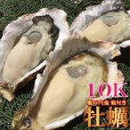 カキ かき 牡蠣 兵庫播磨灘産 播磨カキ10kg前後 鍋 お試し海鮮 魚介 BBQ バーベキュー 具材