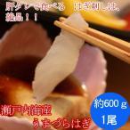 瀬戸内海産 活き締め うまづらはぎ (ハゲ)1尾600g刺身用(4人前)肝ダレで食べるハギ刺しは、絶品です!