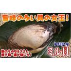 愛知県産または岡山・香川県産300gの本ミル貝 ( みる貝 ミルガイ )