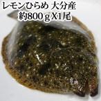 【#元気いただきますプロジェクト】レモンひらめ800g、大分県産(ヒラメ)(平目)5〜6人前
