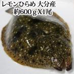 【#元気いただきますプロジェクト】レモンひらめ 600g 大分県産(ヒラメ)(平目)3〜4人前