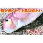 甘鯛 ( アマダイ グジ あまだい ぐじ ) 500g