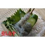 しらす 広島県音戸産(冷凍 刺身用)100gX3パック冷蔵品との同梱不可!