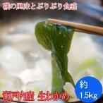 生わかめ 瀬戸内海産 約1.5kg(生ワカメ)