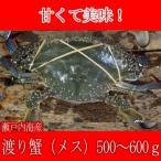 ワタリガニ メス( 渡り蟹 ガザミ )1ぱい(500〜600g) 瀬戸内海産 活き締め