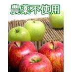 11/下旬以降発送予定【A級品】竹嶋有機農園の自然農法 林檎  富士+王林ミックス<5kg>
