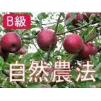 りんご 林檎 リンゴ  (B級品) 竹嶋有機農園の自然農法りんご ふじ (富士) 約18kg:段ボール バラ詰 青森県