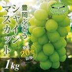 【お得用】豊岡ぶどう シャインマスカット1kg(B品約2房) 糖度20度前後 大粒種なし 農園直送 兵庫県産