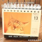 Yahoo!高野縞次郎商店CAT Calender2019 半額セール 日めくり ねこ写真集カレンダー 平成31年 猫 雑貨【レターパックプラス可】C