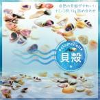 【メール便対応】小さな貝殻 ナミノコ貝 10グラムセット UVレジン 手作りアクセサリー 夏パーツ デコパーツ 天然貝