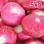 赤かぶら 赤カブ 葉なし玉 約5kg 岐阜県飛騨産