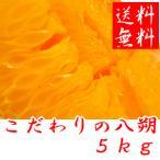 こだわりの八朔(はっさく) 5kg