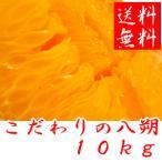 こだわりの八朔(はっさく) 10kg