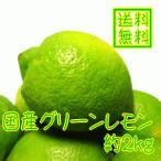 国産(和歌山有田産)レモン 約2kg(ノーワックス)(防腐剤不使用)(減農薬)