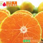 こだわりの極早生有田みかん 5kg(送料無料)(不揃い)