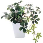 光触媒 インテリアグリーン シュガーバイン KU KU-18 496761D 人工 観葉植物 造花 フェイクグリーンの写真