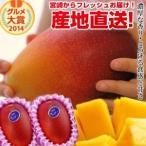 宮崎完熟マンゴー大玉 2玉 2020年度 フレッシュ 産地直送 くだもの 果物 フルーツ マンゴー 母の日 父の日 お中元 ギフト 送料無料