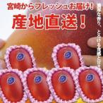 特大宮崎完熟マンゴー 6玉 2020年度 フレッシュ 産地直送 マンゴー 父の日 母の日 お中元 ギフト 贈り物 果物 くだもの フルーツ 送料無料