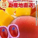 宮崎完熟マンゴー中玉 2玉 2021年度 フレッシュ 産地直送 マンゴー 母の日 父の日 お中元 ギフト くだもの 果物 フルーツ 送料無料