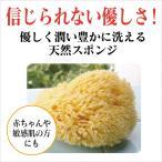 天然海綿スポンジ(ハニコム種/全身用LLサイズ16cm) イタリア・ベリーニ社製の天然カイメンスポンジ 敏感肌・赤ちゃんにおススメ