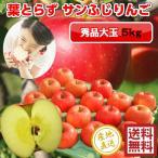 サンふじ りんご 葉とらず 5kg・14-16玉前後 秀品大玉・贈答用ランク