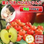 サンふじ りんご 葉とらず 10kg 36-40玉前後 秀品 贈答用ランク 送料無料