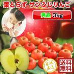 サンふじ りんご 葉とらず 3kg・10-12玉前後 秀品・贈答用ランク