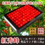 さくらんぼ 紅秀峰 青森南部町産 秀品 約1.2kg 2Lサイズ 贈答用手詰め