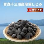 しじみ 十三湖 青森県産 特大粒 冷凍 しじみ貝 1kg入り