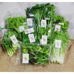 送料込 新鮮野菜セット 数量限定 丹波野菜 金曜日ごとの発送です
