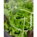 農薬一切不使用 4種のベビーレタスMIX大パック 8袋入