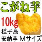 安納芋・黄金品種。 Mサイズ/10kg/種子島産/これは旨い!紅品種を凌ぐ美味しさでも生産量は極僅か!さつまいも粉200g無料進呈中