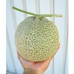 たね ナント種苗 メロン  種子 ベランダdeメロン(アニバーサリー)小袋
