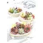 ジャンクオリジナルハンドルお洒落な多肉植物の贈り物 新築祝 誕生日祝 開店祝 結婚式祝