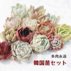 韓国苗 エケベリア おまかせ5種類セット 多肉植物 S〜Mサイズカット苗 3cmから5cm苗 名前付き 薔薇咲き ロゼット echeveria