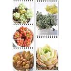 セダムセット5種 多肉植物のセット
