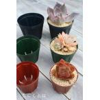 スリット鉢2.5号 緑 苗用 間口7.5cm 多肉植物にピッタリなスリット鉢