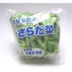 サラダ菜 1玉